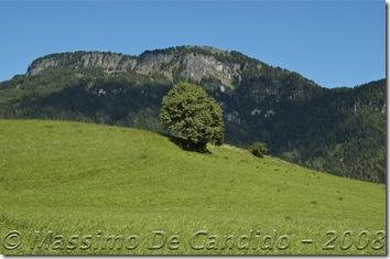 Albero_prato