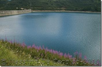 Lago_di_Morasco_fiori_riflesso