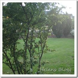 Svärfars lummig trädgård