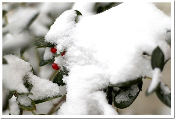 snow9d