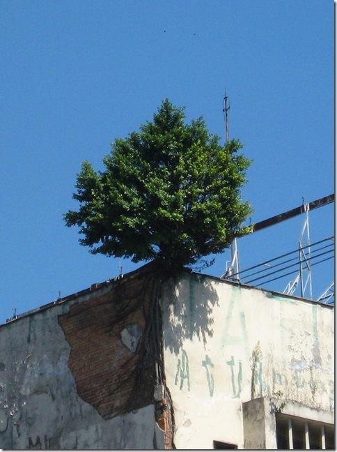 2009-04-03 Árvore 03