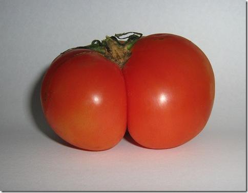 2009-09-19 - Tomate gostoso