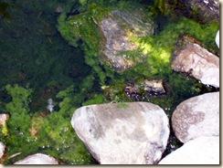 algae cu 5-25-2009 5-38-15 AM 2304x1728