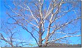 treebranch2