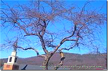 treebranch4