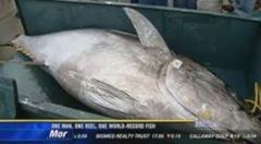 peixe de 184 kg-1_250