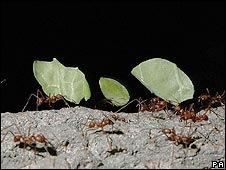 formigas-1