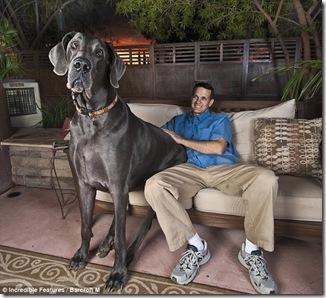 Anjing Terbesar