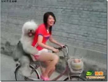 ride_a_bike_with_a_dog_5-550x416-custom