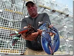 ba-blue_lobster_0500513883