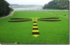 rice-art11