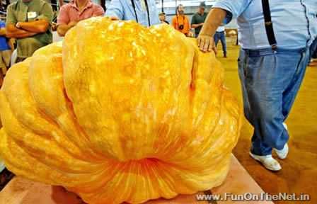 Largest fruits & vegetables