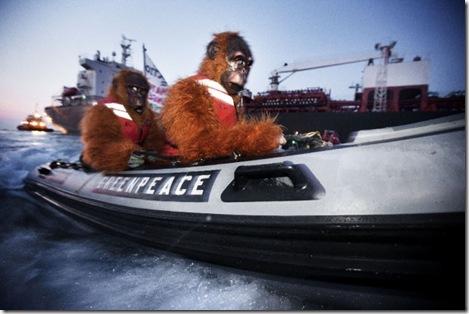 Greenpeace, le più belle immagini di un anno in azione3