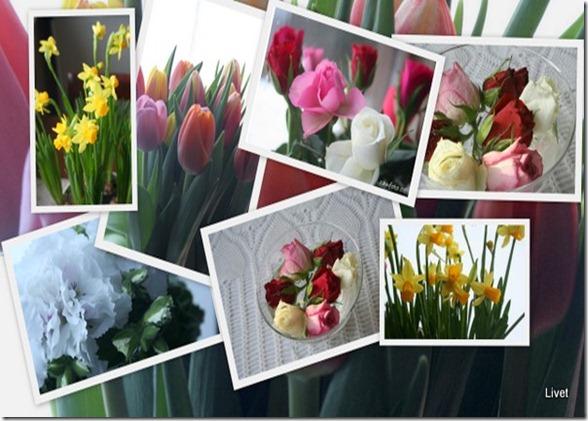 Blomster inne