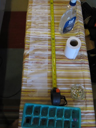 grow peace and dance in the garden: Awesome DIY Seed Tape