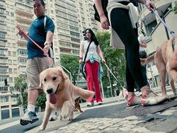 Cãonhecendo São Paulo (212)
