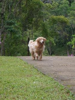 Dogs Trekking 3 (43)