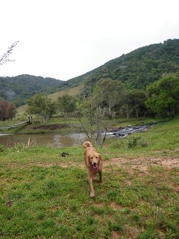 Dogs Trekking 3 (56)