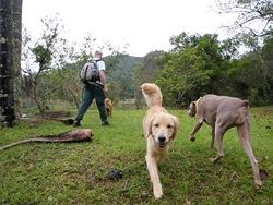 Dogs Trekking 3 (58)