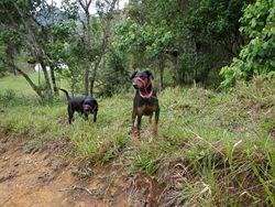 Dogs Trekking 3 (65)