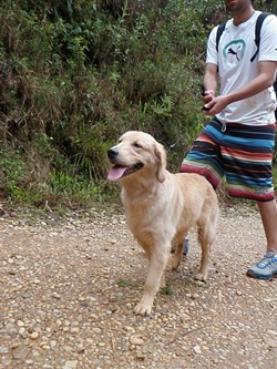 Dogs Trekking 3 (77)