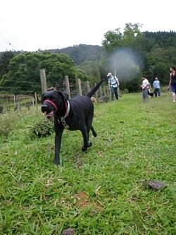 Dogs Trekking 3 (125)