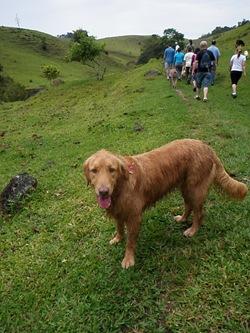 Dogs Trekking 3 (148)