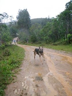 Dogs Trekking 3 (269)