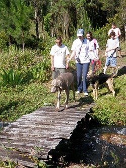 Dogs Trekking 3 (321)