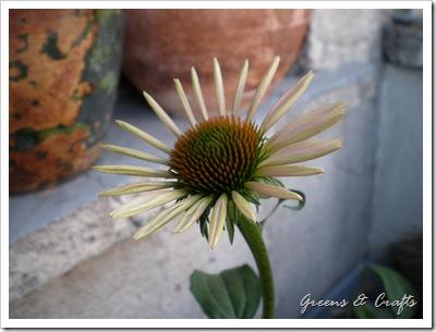 Flower Garden 003