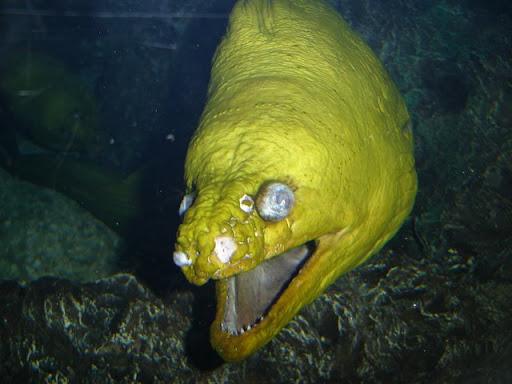 Moray Eel 2