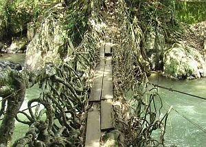 Jembatan Akar Terunik Di Dunia [ www.BlogApaAja.com ]