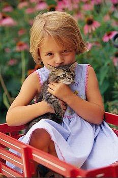 Ухаживать за тайским котенком — все