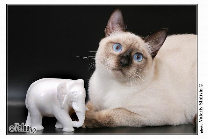 питомник white elephant