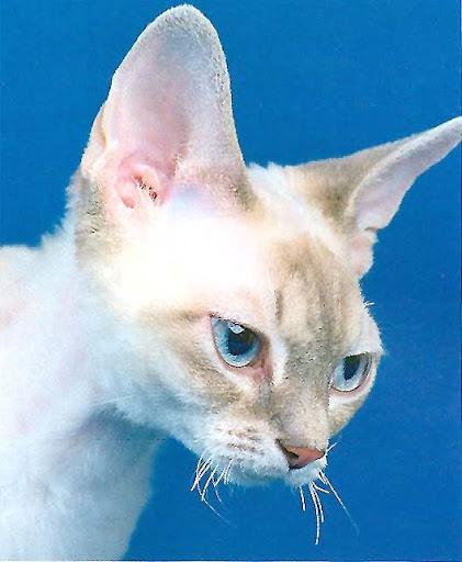 Что делать если у кошки поломались усы