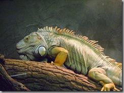 reptilia 002