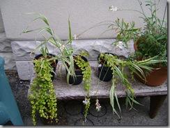 fallen garden pots