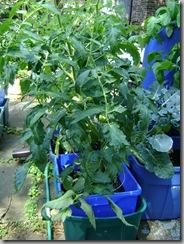 garden aug 09 2009-08-09 031