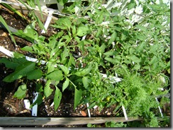 garden aug 09 2009-08-09 058
