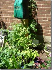 garden aug 09 2009-08-09 003