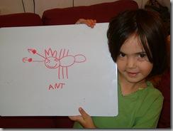 ants 002
