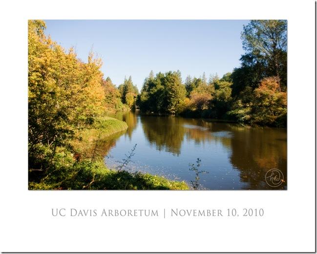 2010-11-10-arboretum-018-web-poster