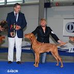 CELJE EUROPEAN DOG SHOW-SLOVENIA-2010-10-01c.jpg