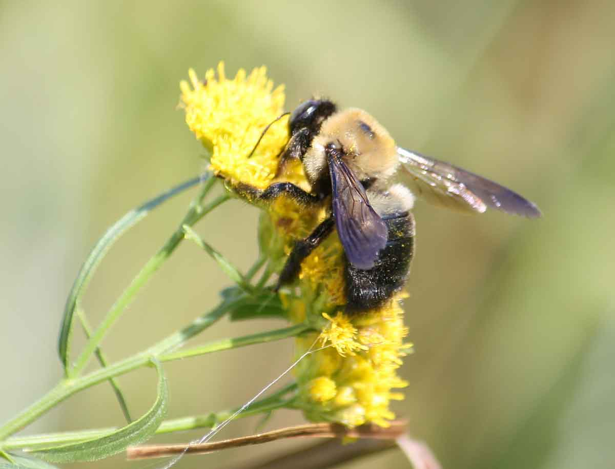 Eye Candy: Bumble Bee