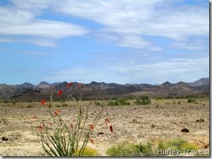 A view of the ocotillo and Chocolate Mountains