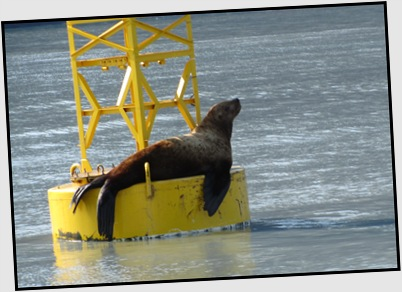 Sea lion relaxes as we cruise out.