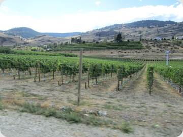 The grapes vines and fruit trees covered the valley and hillsides as far as you could see in the fertile area in southern Canada as we approached Washington.