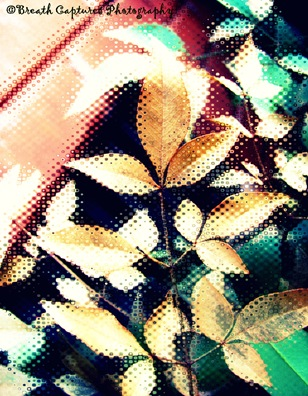 Plants III (152)