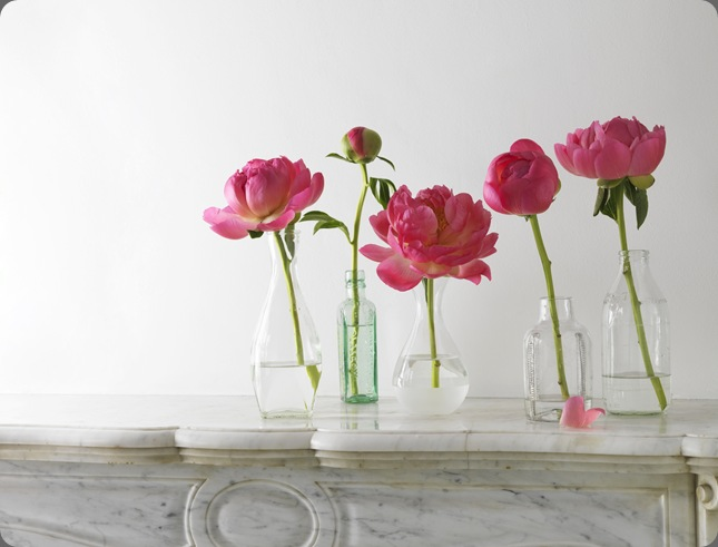 peonies nancy liuchin blogspot