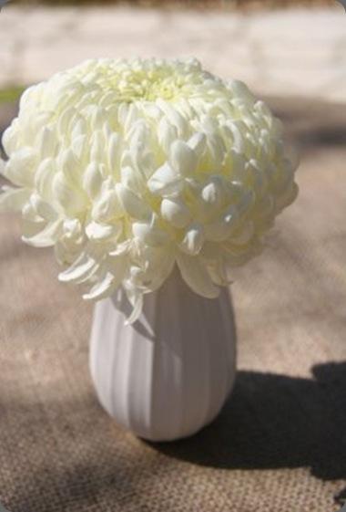 Katherine4 last petal austin
